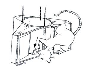 rats-rotta-sat